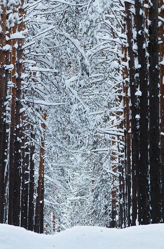 Winterzeit ist Erkältungszeit © flickr / ressaure